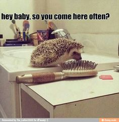 Funny Animal Pictures - View our collection of cute and funny pet videos and pics. New funny animal pictures and videos submitted daily. Funny Animal Pictures, Funny Photos, Funny Animals, Cute Animals, Funny Cute, The Funny, Funny Hedgehog, Hedgehog Art, Dump A Day