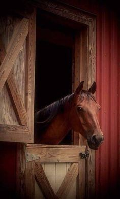 Sabra, my horse, at Barn Door. All The Pretty Horses, Beautiful Horses, Animals Beautiful, Arte Equina, All About Horses, Majestic Horse, Horse Farms, Horse Pictures, Horse Photography