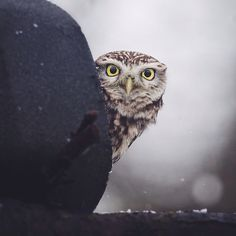 Wildlife Touching Photography of an owl by Konsta Punkka