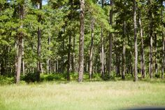 Each to home site for sale in this spacious community features everything needed to build your private sanctuary. George Bush Intercontinental Airport, Land For Sale, Houston Tx, Virtual Tour, Acre, Woodland, Ranch, Texas, Community