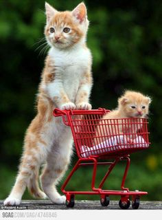 Momma cat doing some groceries.