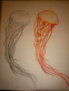 Jellyfish sketches for tattoo