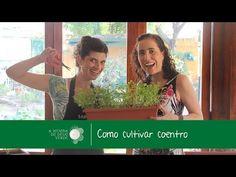 Como Cultivar Coentro/How to Grow Coriander - A Menina do Dedo Verde - YouTube