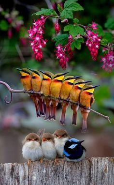 Beautiful birds abstract birds birds bird k Pretty Birds, Beautiful Birds, Animals Beautiful, Exotic Birds, Colorful Birds, Nature Animals, Animals And Pets, Cute Baby Animals, Funny Animals