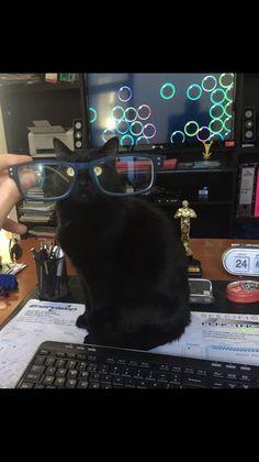 Geeky Kitty 😻