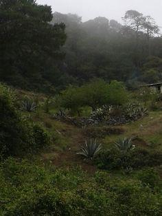 Landscape from Sierra Gorda...Queretaro