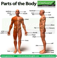 Parts of the Body Picture