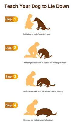 DOG TRAINING TIPS 50