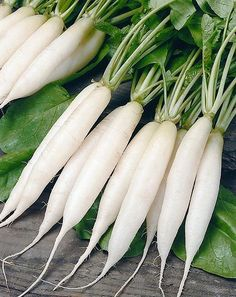 Simple grated white radish salad recipe made with Daikon or other white radishes, which are common in Germany.