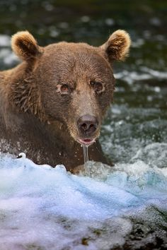 Photo Look Into My Eyes by Buck Shreck on 500px