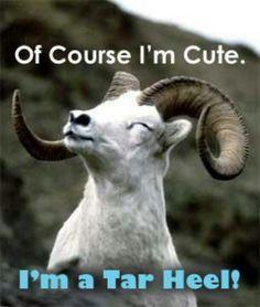 I'm a Tar Heel! :)