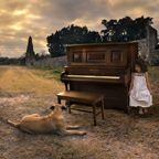 Tom Chambers Photography