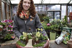 Tiny plantscapes can take on any theme, from an English garden, to a Zen retreat. Organic Gardening, Gardening Tips, Indoor Gardening, Fairy Gardening, Gnome Garden, Dwarf Mondo Grass, Dwarf Plants, Little Gardens, Garden Terrarium