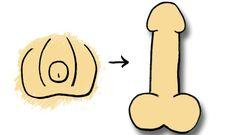 Rund 80 Prozent der Männer in Deutschland haben einen Blutpenis, der seine volle Größe erst bei Erregung entfaltet