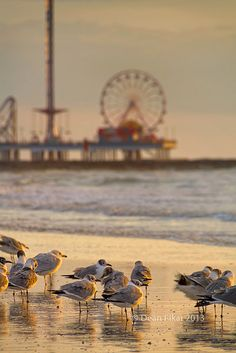 Galveston Pleasure Pier at Dawn- Dave and the boys, nursing their hangovers, discuss where to go for breakfast after a their big night out