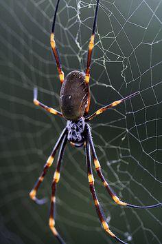 """Jong Soo (Peter) Lee. (2007). """"Spider."""""""