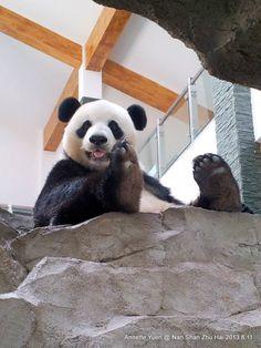 Hot Summer at TianMu Lake / by Pandas International It's been hot at TianMu Lake but Ao Yun and Yun Yun are finding ways to keep cool, and keep each other company. Panda Cam, Panda Bebe, Fluffy Animals, Baby Animals, Baby Panda Bears, Baby Pandas, Yun Yun, Panda's Dream, Warm Fuzzies