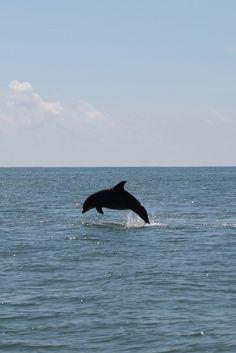 St. George Island, Florida #dolphin #sgi