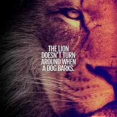20 Motivational Quotes Brought To You By Big And Powerful Cats - I Can Has Cheezburger? Lioness Quotes, Wolf Quotes, Joker Quotes, Wisdom Quotes, True Quotes, Qoutes, Laugh Quotes, Leo Quotes, King Quotes