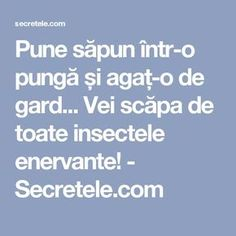 Pune săpun într-o pungă și agaț-o de gard... Vei scăpa de toate insectele enervante! - Secretele.com Salvia, How To Get Rid, Beautiful Gardens, Good To Know, Agate, Pune, Gardening, Claudia Cardinale, Education