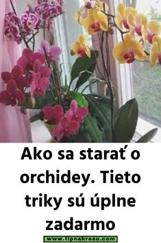 Ako sa starať o orchidey. Glass Vase, Plants, Decor, Decoration, Decorating, Flora, Dekorasyon, Plant, Dekoration