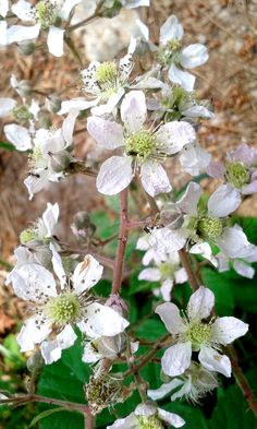 57 Mejores Imagenes De Flores Silvestres Blancas Wild Flowers