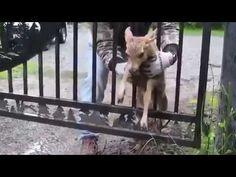Спасение животных 1 / Rescue animals 1