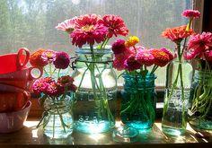 Windowsill full of zinnias