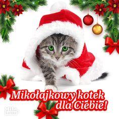 Merry Christmas, Christmas Ornaments, Crochet Hats, Holiday Decor, Asd, Shoes, Merry Little Christmas, Knitting Hats, Zapatos
