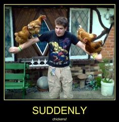 Suddenly... chickens!  #Suddenly