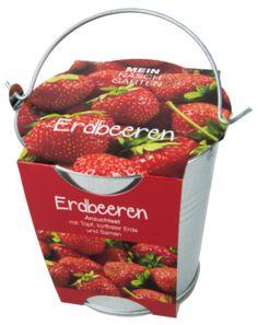 Pflanzset in Zinkeimer, Erdbeere - Erdbeeren - aus eigener Anzucht - köstlich und süß mit duftendem Aroma. Legen Sie das Saatgut auf die Erde, leicht andrücken, angießen und gleichmäßig freucht halten