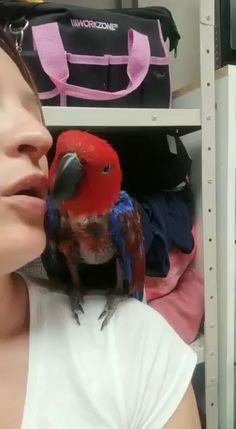Funny Birds, Cute Birds, Pretty Birds, Beautiful Birds, Animals Beautiful, Funny Animal Videos, Funny Animal Pictures, Animal Memes, Cute Little Animals