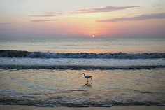 Egret at Sunrise - Photo by Ken Buckner - Islands Art & Books