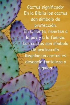 Significado de los cactus.
