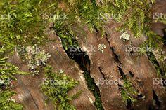 Fallen Tree Macro royalty-free stock photo