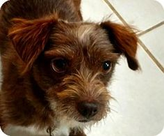 Greenville Tx Dog Adoption