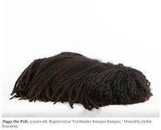 Sleeping puli