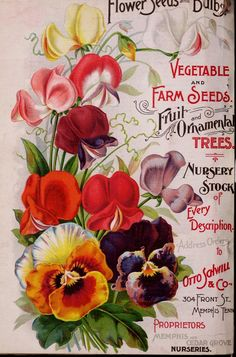 1898 Annual catalogue of Otto Schwill & Co.'s seeds