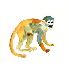 SQUIRREL MONKEY Original watercolor painting 10X8inch ($30) ❤ liked on Polyvore featuring animals, art, watercolor and monkey
