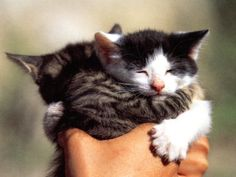 Thank you, kittens, for all you do.   23 Pictures Of Kittens To Remind You That Good Things Exist