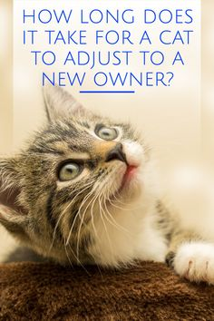 Cat Behavior Problems, Scared Cat, Kitten Care, Cat Care Tips, Cat Health, Health Tips, Outdoor Cats, Cat Facts, Wellness