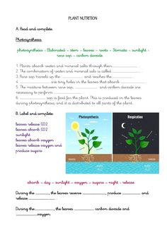 Nutrition In Plants, English Worksheets For Kids, School Subjects, Photosynthesis, Google Classroom, Science And Nature, You Can Do, Colorful Backgrounds, Exercises