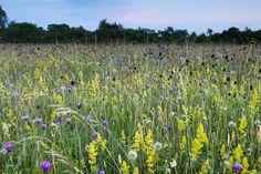Clattinger Farm and other pretty English meadows