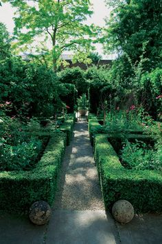 Perennials inside hedges