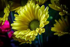 Yellow by Keith D on 500px