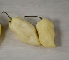 Bhut Jolokia White - Pepper