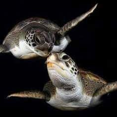 sea turtles -- checking in
