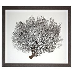 Sea Fan in Driftwood Shadow Box Shadow Box, Driftwood, Dandelion, Fan, Artwork, Flowers, Plants, Work Of Art, Floral