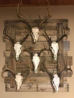 The 25 best European mounts deer. Deer Skull Decor, Deer Hunting Decor, Deer Head Decor, Hunting Crafts, Antler Wall Decor, Taxidermy Decor, Taxidermy Display, Antler Art, Deer Skulls