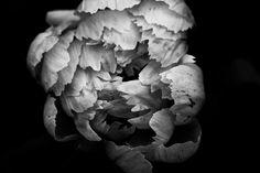 BOTANIX Jf Le Chasseur Planting Flowers, Vegetables, Plants, Photography, Photograph, Photography Business, Veggie Food, Flora, Photoshoot